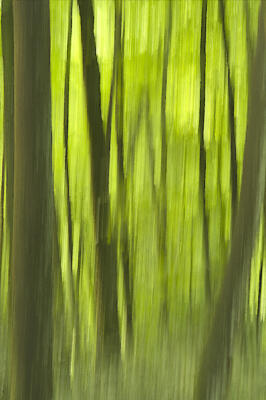 ICM with the trees