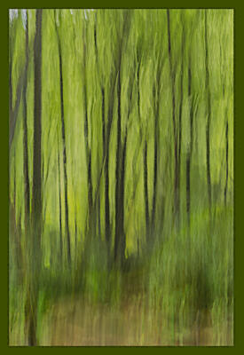 More ICM with the trees