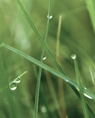 Raindrops on grasses