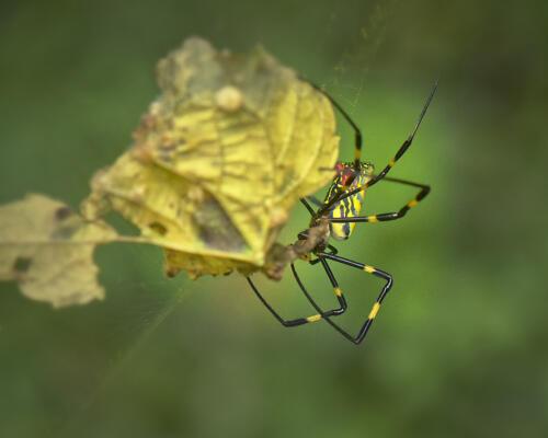 Same spider, different view